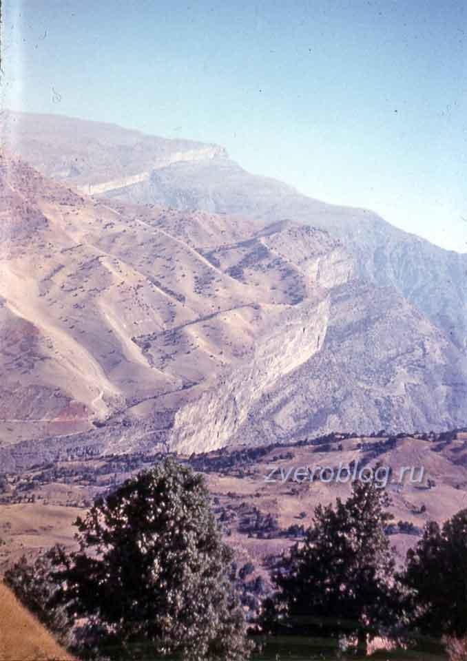 Красота горной природы: Сариасийский район, Южные склоны Гиссарского хребта