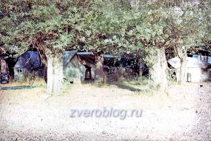 Палаточный лагерь геологов в Узбекистане