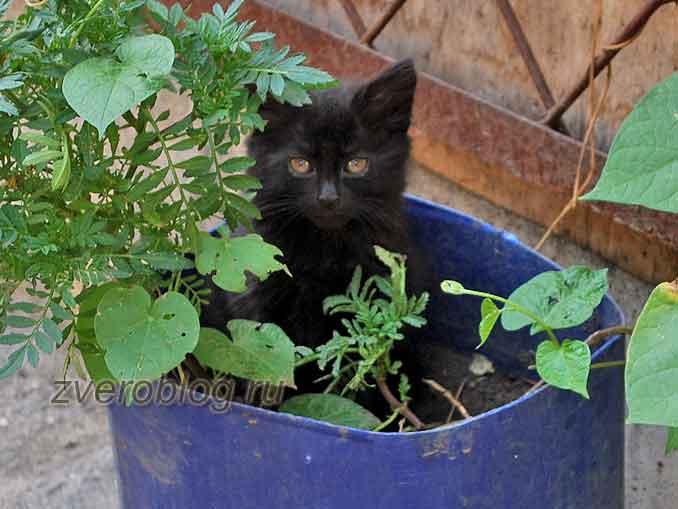 Черный котенок в контейнере с цветами