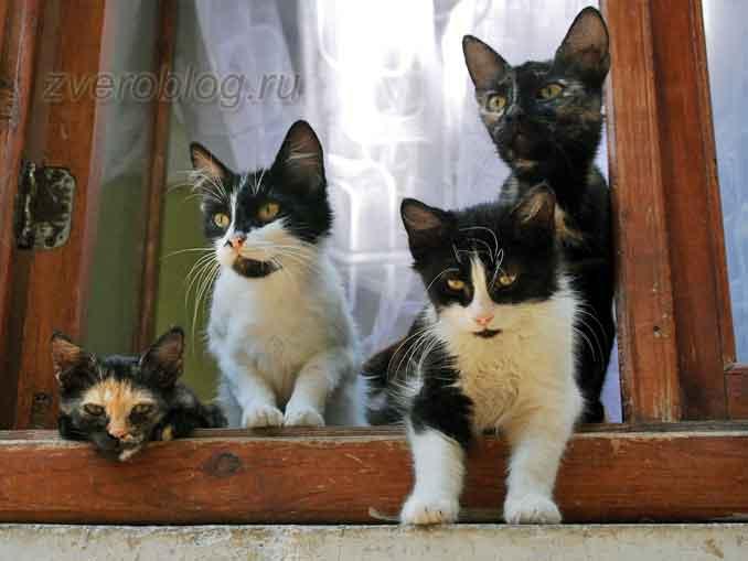 Котята в окне