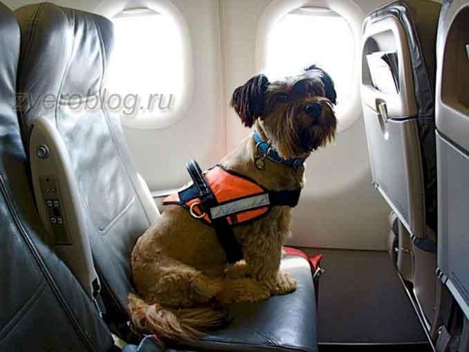 Путешествие с собакой в самолете