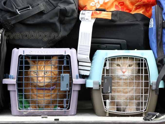 Перелет с котами в самолете
