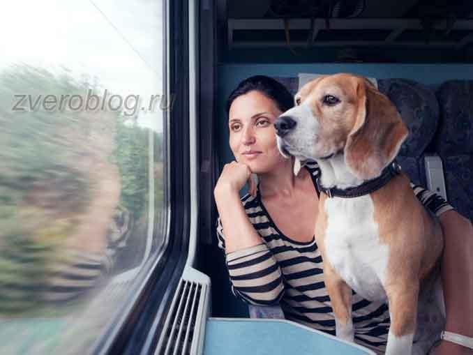 Поездка c питомцем на поезде. Путешествуем с собакой