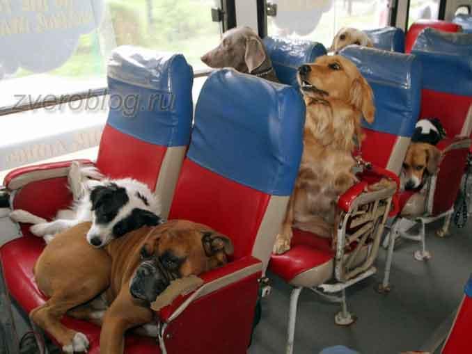 Поездка на автобусе с животными