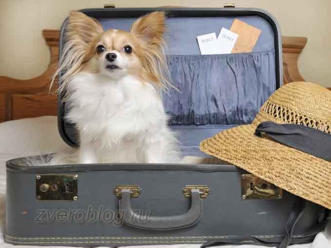Основные правила как путешествовать с животными за границу