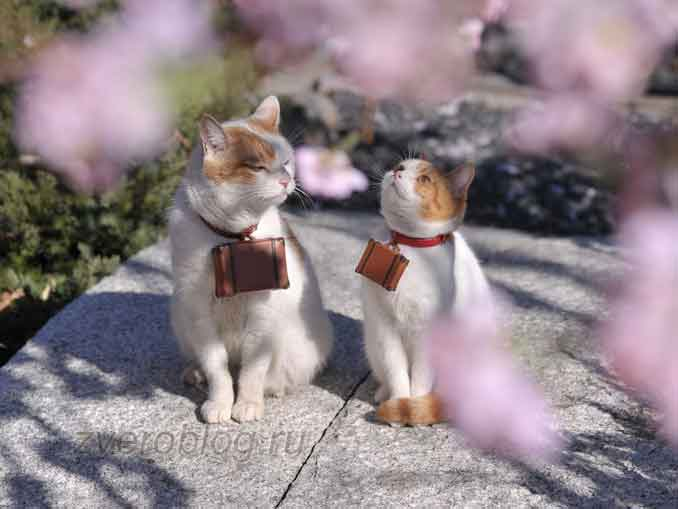 Кошки путешественницы