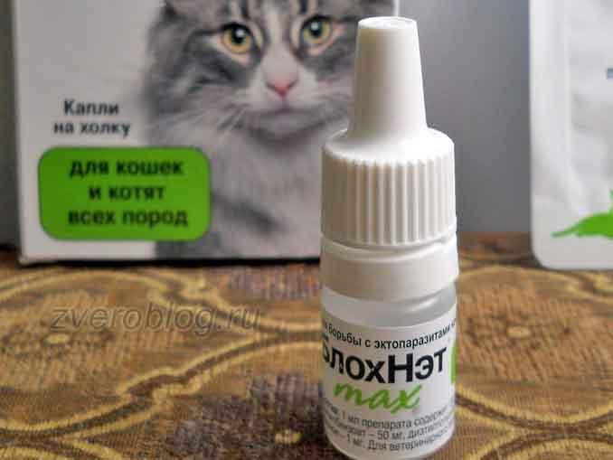 Отзыв о применении препарата БлохНэт для кошек