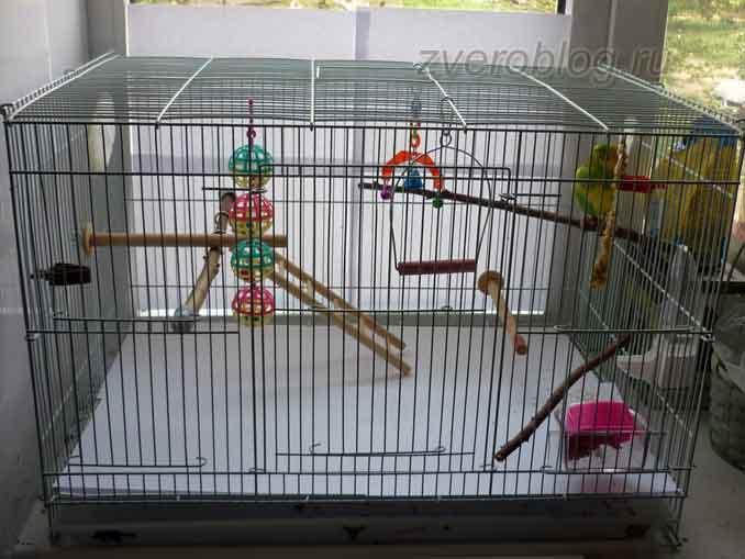 Прямоугольная клетка для попугайчика