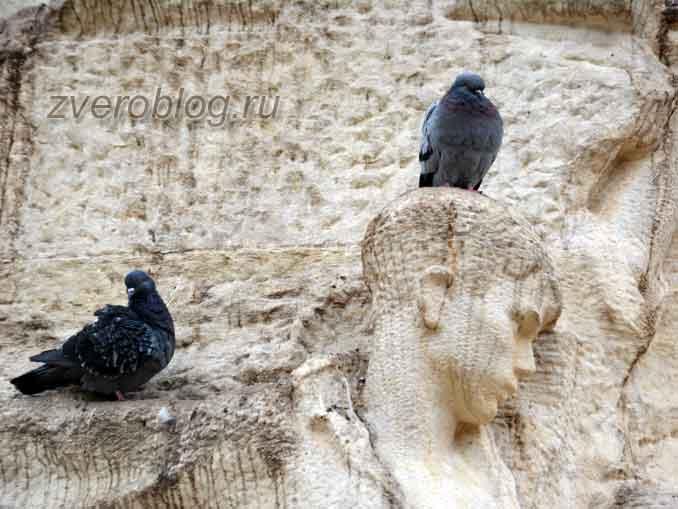 Голуби в городе сидят на памятнике