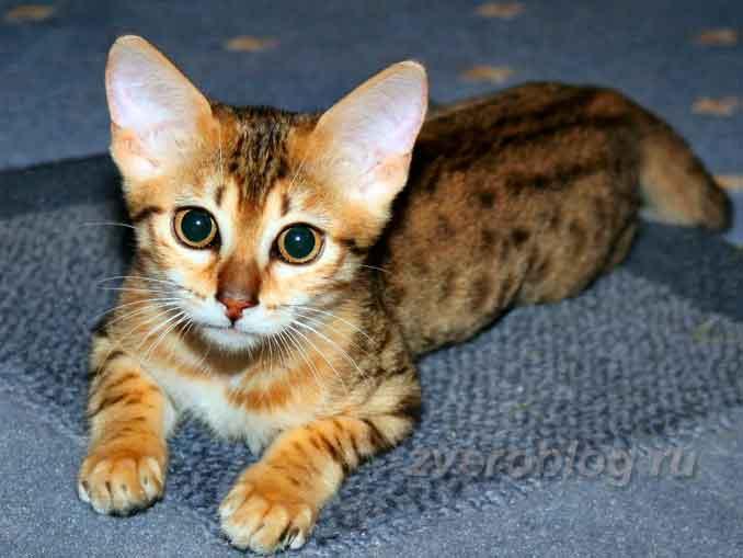 Египетские кошки и их значение в истории древней цивилизаци