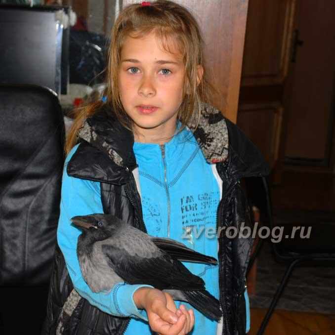 Ребенок держит птенца вороны - вороненка