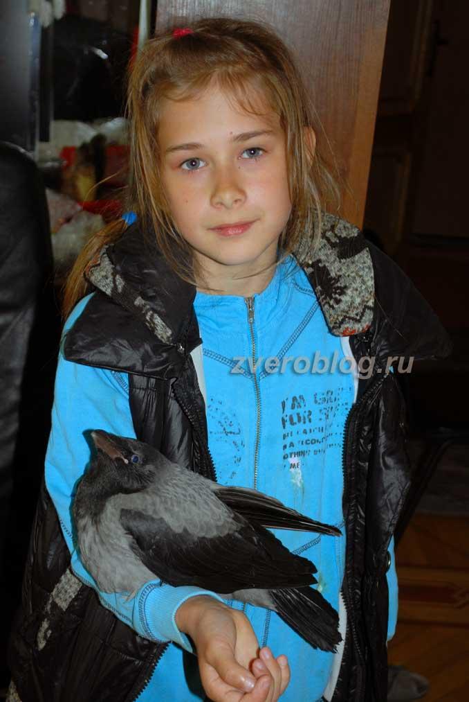 Девочка держит на руках птенца вороны - вороненка